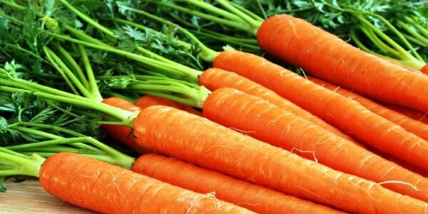 Морковь - фото