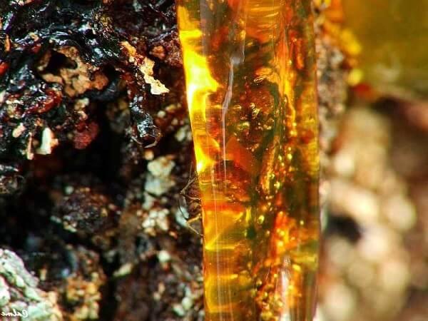 Применение и полеpyst свойства сосновой живицы