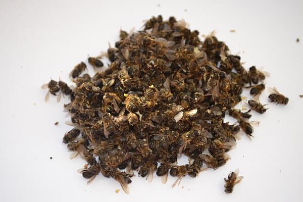 Пчелиный подмор фото