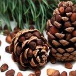 Кедровые орехи - фото