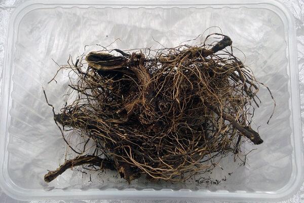 Сухой маралий корень