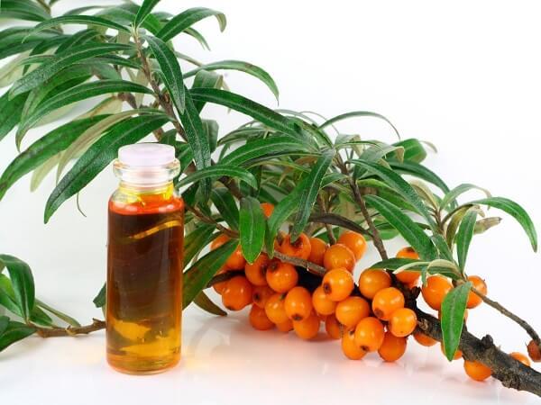 Лечебные свойства облепихового масла
