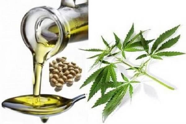 Конопляное масло польза и вред как принимать и способы применения