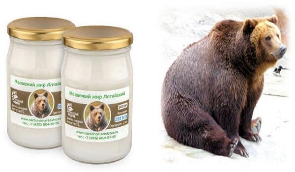Лечебные свойства медвежьего жира