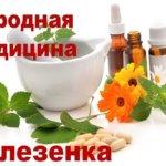 Лечение селезенки травяными сборами